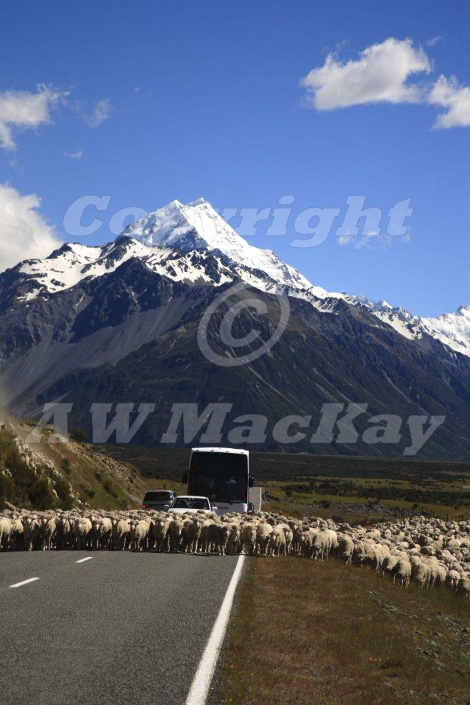 Of Sheep and Mountains II