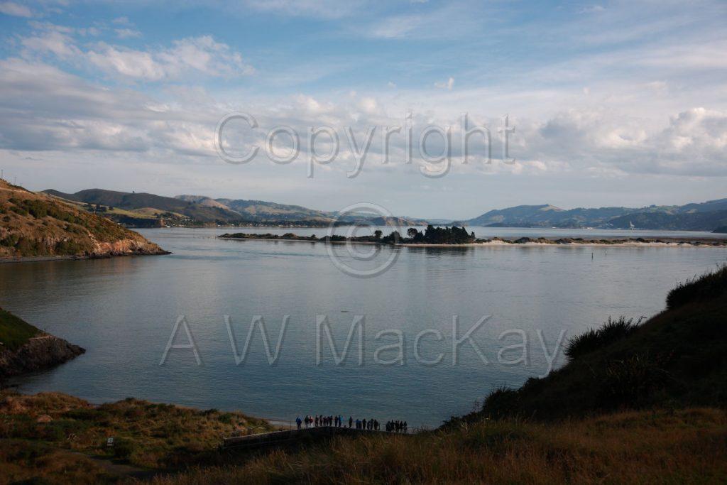 Pilots Beach - Otago Harbour